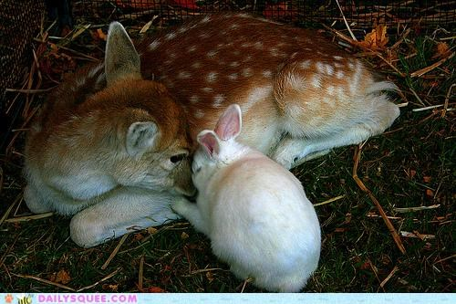 bambi bunny deer disney fawn friends friendship Hall of Fame Interspecies Love IRL Movie quote rabbit thumper - 5092360960