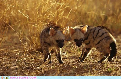 aardwolf aardwolves Babies baby expression face pup pups squee spree surprised