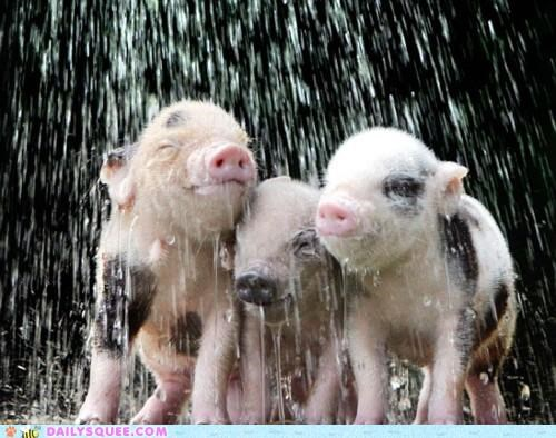 adorable,Babies,baby,bath,bath time,bathing,bliss,do want,friends,Hall of Fame,happy,pig,piglet,piglets,water