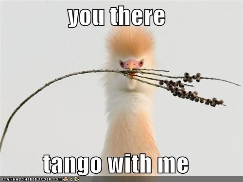animals birds branch dancing I Can Has Cheezburger plant tango twig - 5092529920