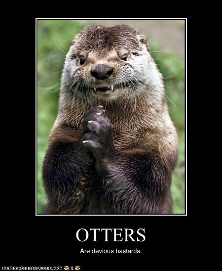 animals,devious,I Can Has Cheezburger,otters,scheming