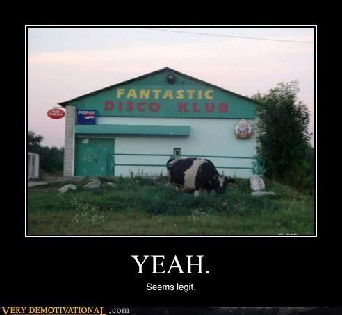 club disco fantastic hilarious seems legit - 5093081344
