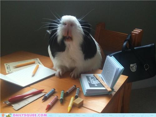 dream guinea pig Hall of Fame lolwut nekkid reader squees studying test