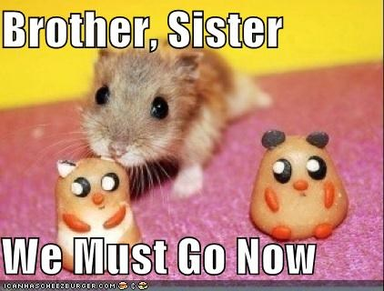 brothers,hamsters,I Can Has Cheezburger,rodents,sisters,we must go