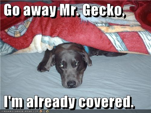 Go away Mr. Gecko, I'm already covered.