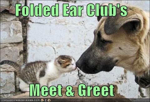 awww,cat,club,ear,ears,folded ear club,friends,german shepherd,kitten,mixed breed,so sweet