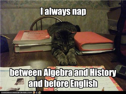 algebra always before between books caption captioned cat english history nap napping pun