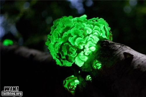 Forest,fungus,glow in,mother nature ftw,night,tree