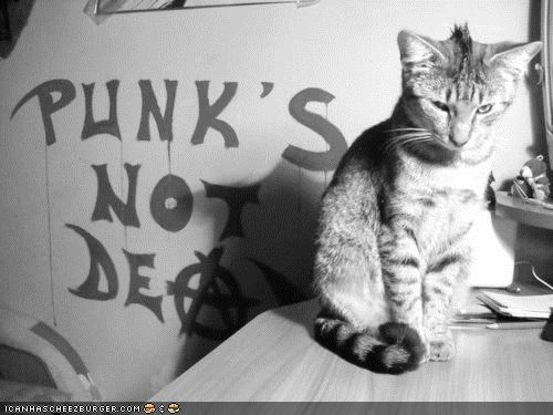 best of the week cyoot kitteh of teh day mohawk Music punk writing - 5095937792