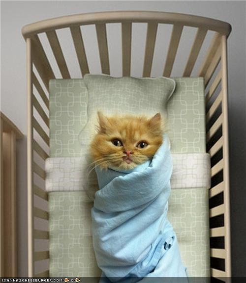 baby,blanket,cyoot kitteh of teh day,human-like,swaddled,warm
