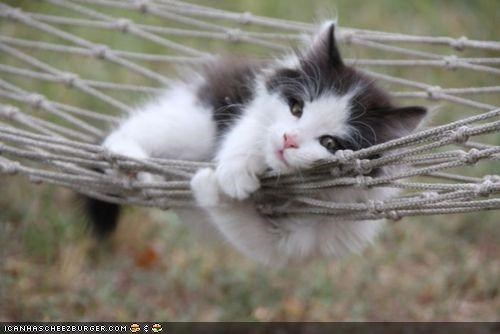 cyoot kitteh of teh day hammock hanging net - 5095960832