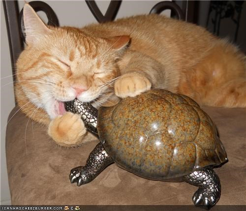 chewing,cyoot kitteh of teh day,i like turtles,Interspecies Love,kissing,making out,mouth,statue,turtle,wtf