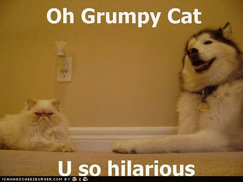 animals,Cats,dogs,grump,hilarious,I Can Has Cheezburger,you so crazy
