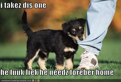 adopted adoption hooman ill-take-this-one puppy whatbreed - 5096795392