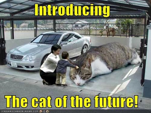 caption captioned cat future human humans introducing photoshop - 5096826880