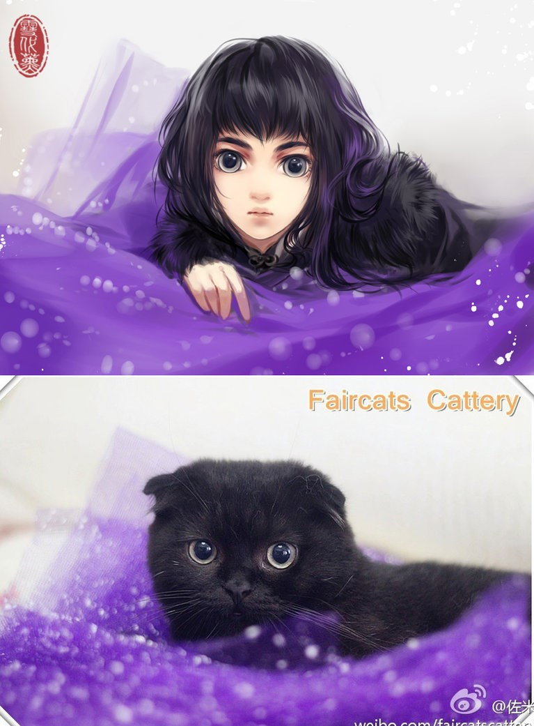 cats drawn as anime girls