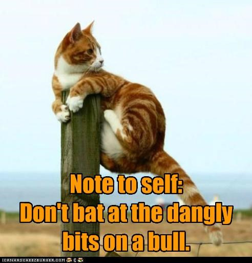 bad idea,bat,bits,bull,caption,captioned,cat,climbing,cowering,dangly,dont,fence,hiding,note,note to self,oops,post,tabby