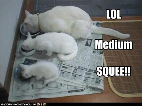 caption captioned cat Cats kitten lol medium sizes squee - 5097102336
