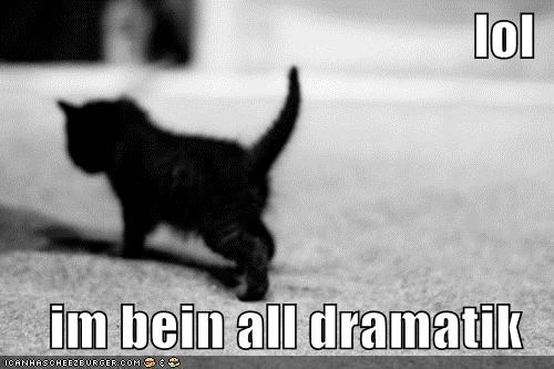 being black and white caption captioned cat dramatic kitten lol walking - 5097158144