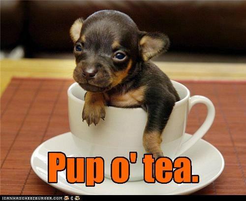 awww cup german shepherd pup o tea puppy teacup - 5097159168