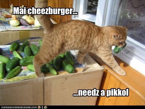 Cheezburger Image 5097285120