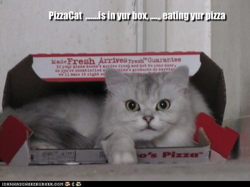 PizzaCat .......is in yur box, ....,, eating yur pizza