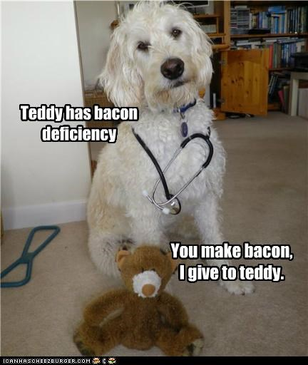 bacon,bacon deficiency,best of the week,cure,doctor,expert,medical,medicine,prescription,teddy,teddy bear,terrier,whatbreed