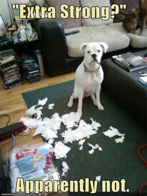 boxer destruction extra strong lies mess toilet paper - 5098421760