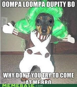 animals animemes bro dawgs Memes oompa loompa Willy Wonka - 5098755584