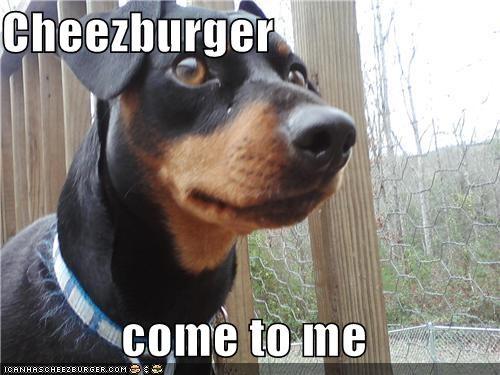 Cheezburger Image 5099043072