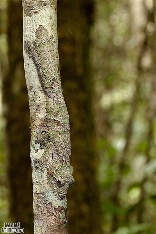 camouflage disguise lizard mother nature ftw tree