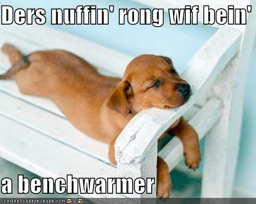 asleep bench benchwarmer nap puppy sleep sleeping whatbreed - 5099167744