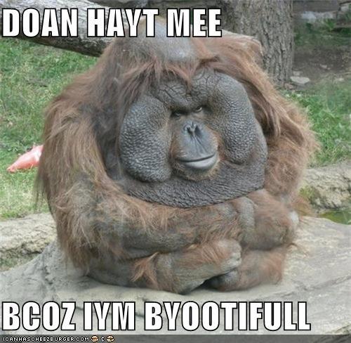 beautiful critters monkey orangutang zoo - 5099180032