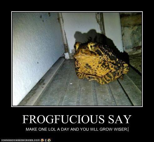 Cheezburger Image 5099239936