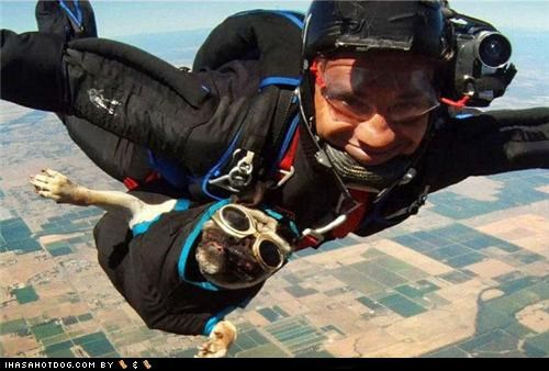adrenaline,adrenaline rush,goggles,happy dog,otis,pug,skydiving