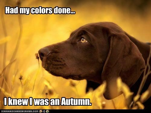 autumn chocolate lab fall golden labrador outdoors smells - 5099327232