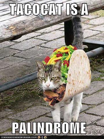 classics palindromes taco tacocat - 5099842304