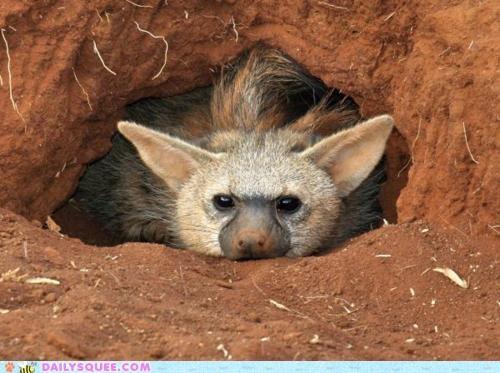 aardwolf baby peekaboo peeking pun rhyming see squee squee spree - 5099894528