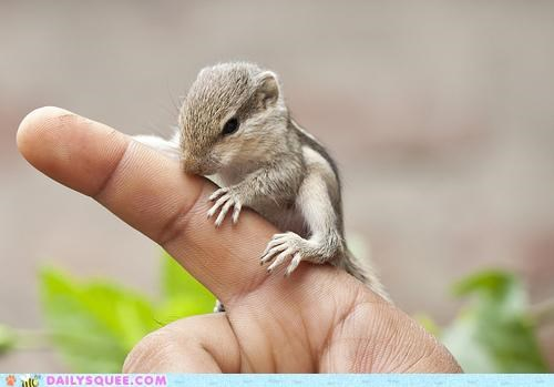 baby click finger perching point pointing squee squirrel tiny - 5100203264