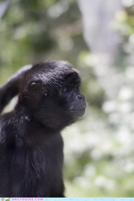 baby Command eyes gorilla granted hypothetical message request squee Staring talk talking wish - 5100212224