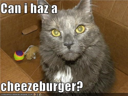 Cheezburger Image 5100408576