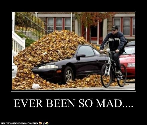 autumn,cars,ever been so mad,fall,leaves,mess,wtf
