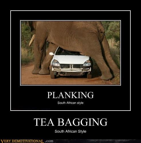 cars elephants Planking Pure Awesome tea bagging tunnel - 5100619264