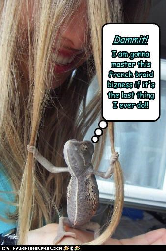 braid,caption,captioned,chameleon,determination,determined,french,gonna,hair,human,master,pulling