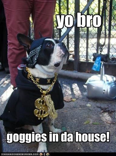 bandana,clothing,gangster,gold chains,hip,hip hop,in da house,pug,yo bro