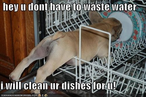 cleaning dishes dishwasher food french bulldogs left overs noms scraps silly dog - 5101358592