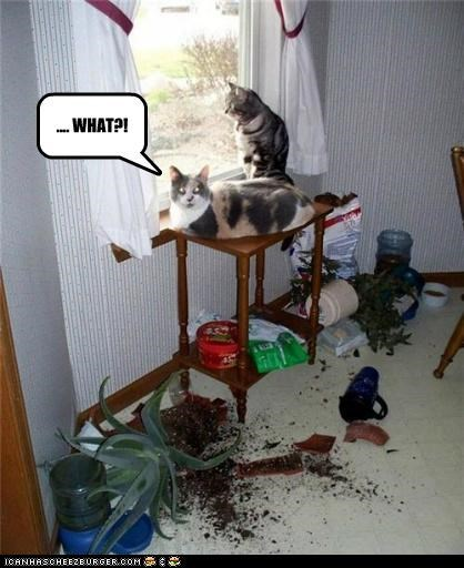 animals Cats disaster I Can Has Cheezburger mess plants what - 5101395200
