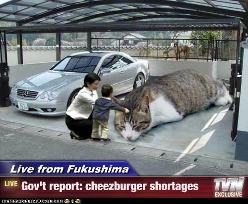 Cheezburger Image 5101537024