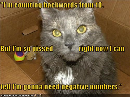 10 backwards caption captioned cat counting need numbers upset - 5101755136