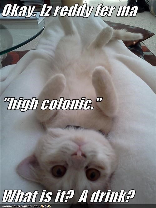 caption,captioned,cat,colonic,confused,confusion,drink,high,Okay,question,ready,what,what is it